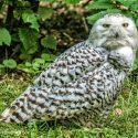 Biotopwildpark Anholter Schweiz