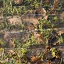 Rondwandeling Groote Modderkolk